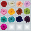 Preserved Rose Colors